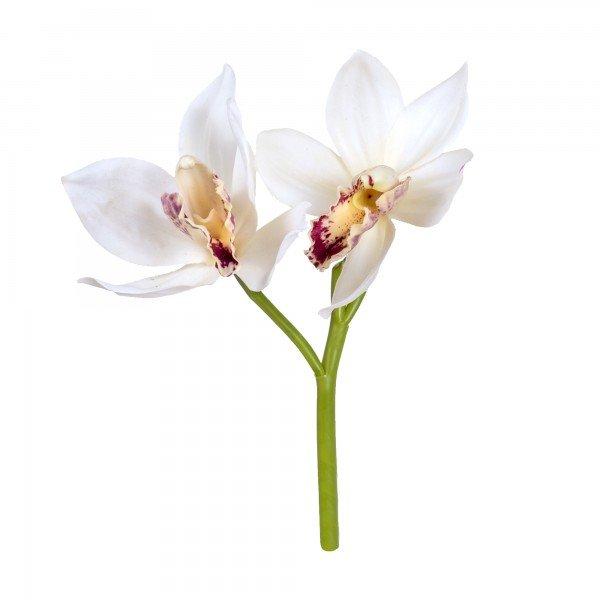 orquidea_cymbidium_branca