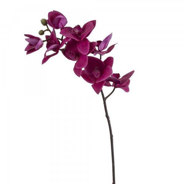 orquidea_phalaenopsis_fucsia