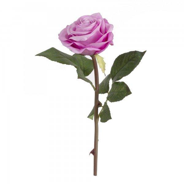rosa_permanente_lilas