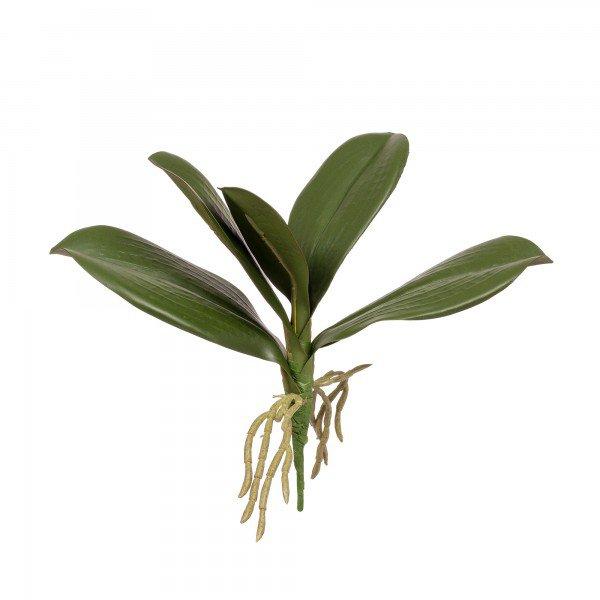 folha_orquidea_phalaenopsis