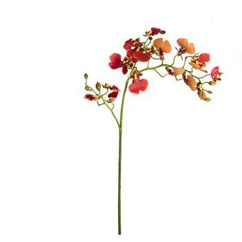 orquidea_oncidium_vermelha