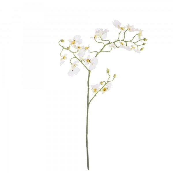 orquidea_oncidium_branca
