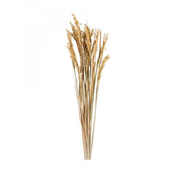 trigo desidratado