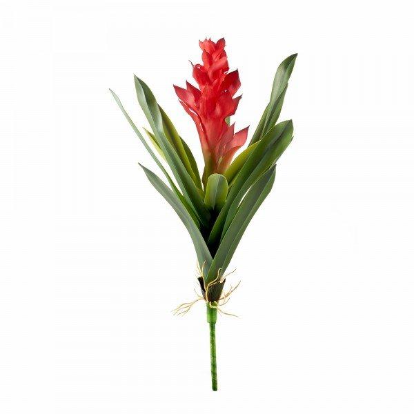 bromelia vermelha grande