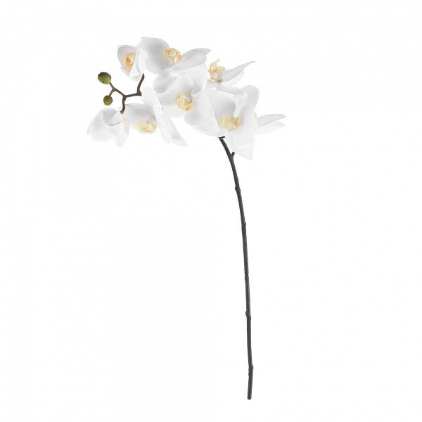 orquidea_phalaenopsis_b